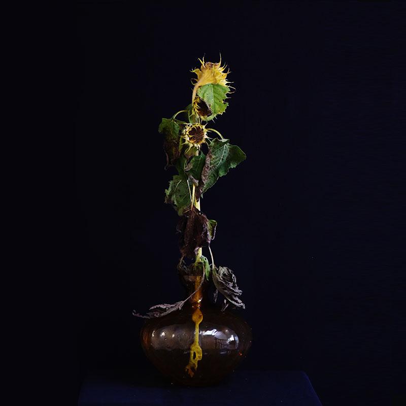 Portrait - Sunflower